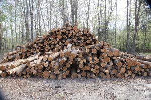 Firewood Log Pile